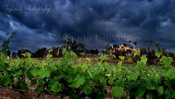 Storm over wineyard